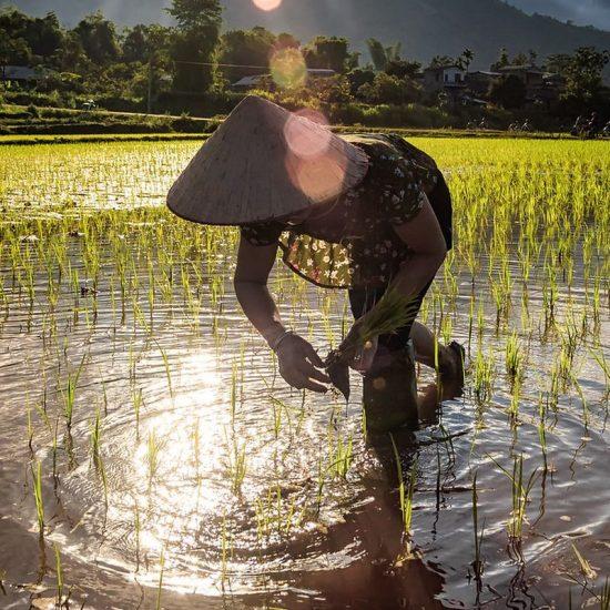 reizen-vietnam