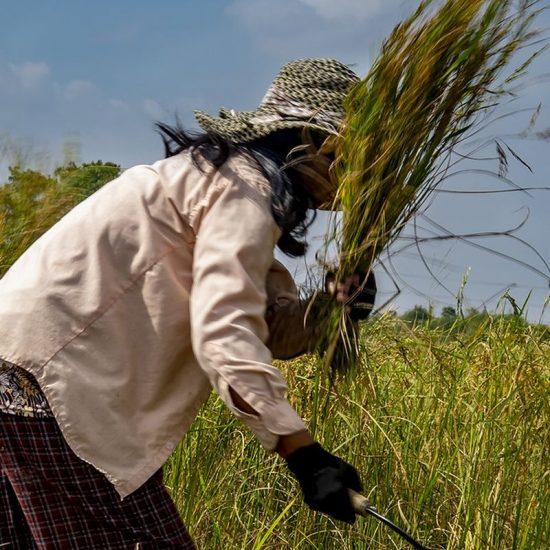 groepsreizen-Cambodja